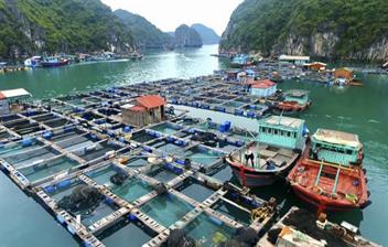 Công ty cổ phần Cảng Hải Phòng hỗ trợ tiêu thụ gần 5 tấn thủy sản, chia sẻ khó khăn với chính quyền, người dân huyện đảo Cát Hải
